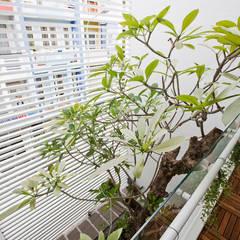 Velux et fenêtres de toit de style  par Công ty TNHH Xây Dựng TM – DV Song Phát