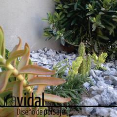 Jardín JuMo: Jardines de invierno de estilo  por Laura Vidal Estudio de Paisajismo - Interiorismo,Moderno Piedra