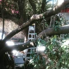 หลังคาในสวน by Línea de tierra