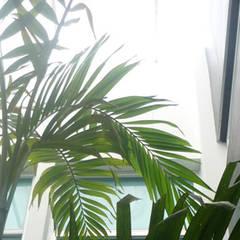 Casa Vega aruachan: Jardines de estilo  por mínimal arquitectura