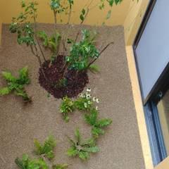 주택정원 - 경기도 고기동 타운하우스 정원 프로젝트: (주)더숲의  앞마당