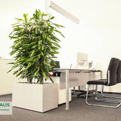 Pflanzen - der ideale Raumteiler:  Kongresscenter von BAUMHAUS GmbH   Raumbegrünung Pflanzenpflege