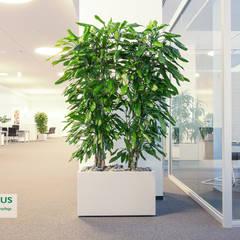 Pflanzen - der ideale Raumteiler:  Veranstaltungsorte von BAUMHAUS GmbH   Raumbegrünung Pflanzenpflege