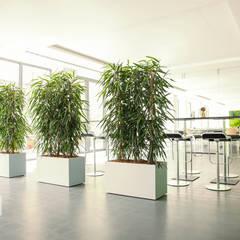 Projekty,  Szpitale zaprojektowane przez BAUMHAUS GmbH   Raumbegrünung Pflanzenpflege