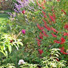 حديقة Zen تنفيذ Maria Mayer | Interior & Landscape Design,