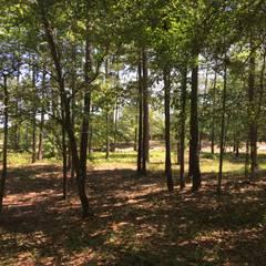 584 Hearthside Drive – 0.4 Acres:  Garden by Oakwood Ventures by Jones Pharr, Minimalist