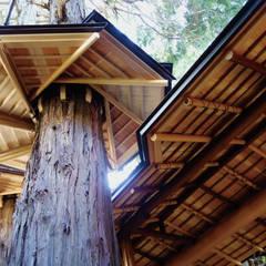 樹木傘見上げ: 守山登建築研究所が手掛けた商業空間です。