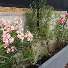 Jardinera borde de piscina: Antejardines de estilo  por Deck and Garden