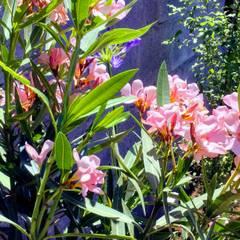 Detalle de Flores en jardineras: Jardines de estilo  por Deck and Garden