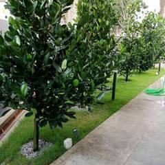 Landscape Design & Build - Bukit Segar, Cheras, Kuala Lumpur:  Front yard by Hadid Design Group