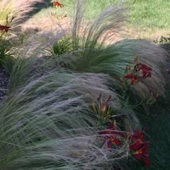 Trente nuances de verts...: Jardin de style de style Tropical par Paradeisos conception de jardin