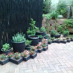 GASPARI:  Garden by Japanese Garden Concepts, Asian