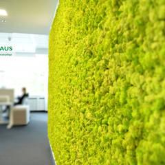 Cliniche in stile  di BAUMHAUS GmbH   Raumbegrünung Pflanzenpflege