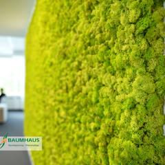 MOOSBEGRÜNUNG -  ISLAND MOOS:  Ladenflächen von BAUMHAUS GmbH   Raumbegrünung Pflanzenpflege