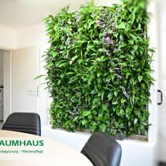 Grüne Wände im Büro oder die BAUMHAUS - Stand-Alone Pflanzwand:  Krankenhäuser von BAUMHAUS GmbH   Raumbegrünung Pflanzenpflege