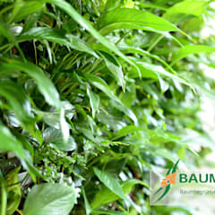 Grüne Wände im Büro oder die BAUMHAUS - Stand-Alone Pflanzwand:  Bars & Clubs von BAUMHAUS GmbH   Raumbegrünung Pflanzenpflege