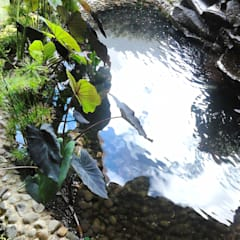 Пруд в саду в . Автор – Ambient Natura