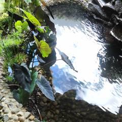 Ambient Naturaが手掛けた池