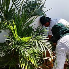 Mantenimiento e instalación de áreas verdes: Jardines de estilo topical por Quetzal Jardines
