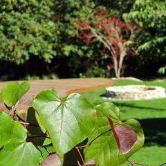 Eastern redbud:  Garden by MyLandscapes Garden Design