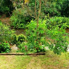 Estanques de jardín de estilo  por Oria Arquitetura & Construções