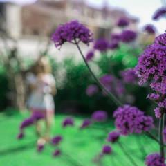 Le piante: Giardino in stile  di AbitoVerde