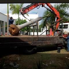 Trasplante de Palma : Jardines de estilo  por Globo Natural