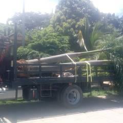 Trasplante de Palmas: Jardines de estilo mediterráneo por Globo Natural