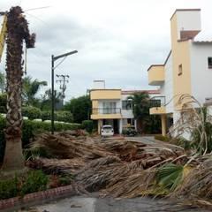 Palma talada: Jardines de invierno de estilo moderno por Globo Natural