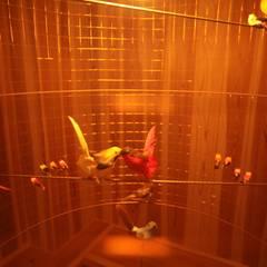 光の教会 セカンドシーズン: 株式会社高野設計工房が手掛けた子供部屋です。,