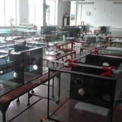 Glas Aquarium, Glas Aquarien, Aquariumbau nach Maß:  Wohnzimmer von Manufaktur von Doberstein