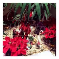 Зимние сады в . Автор – Casa de Plantas Ferrari