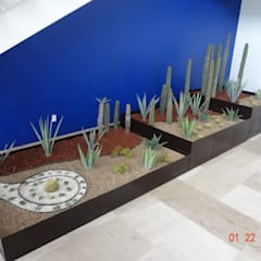 Jardín xerófilo: Oficinas y tiendas de estilo  por Green Gallery