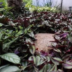 PATIO CONDESA: Jardines de estilo  por HÁBITAT VERDE PAISAJISMO, Rústico