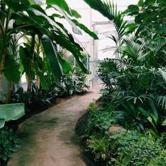 Jenis Taman Tropis:  Halaman depan by Tukang Taman Surabaya - Tianggadha-art