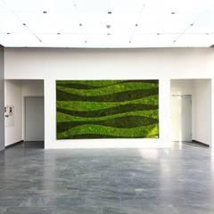 Waldkugelmoos:  Geschäftsräume & Stores von AMMON Raumbegrünung
