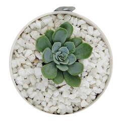 Matera Mini (8cm) Colgante: Jardín de estilo  por Viridis Productos Eco Amigables