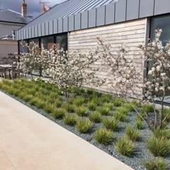 Pool Terrace:  Pool by Roger Webster Garden Design, Modern