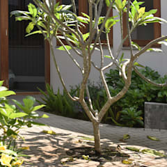 Garden Shed by CV Berkat Estetika, Tropical Wood Wood effect