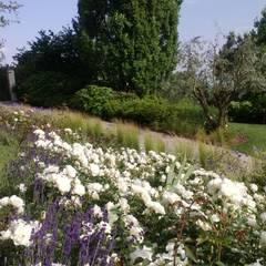 Front garden by arch. Angela Mosciarelli, Rustic
