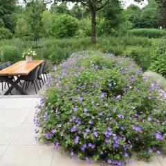 Jardines zen de estilo  por Mocking Hoveniers , Moderno