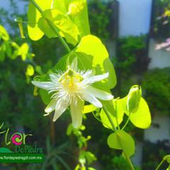 by Flor de Piedra Jardines Verticales Tropical