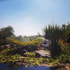 Vườn ao theo Paisare - Paisajismo y arquitectura, Mộc mạc