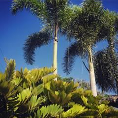 JARDINES CON ALMA: Jardines de estilo  por LA COSTERA PAISAJISMO Y JARDINERIA, Tropical