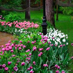 Jardines en la fachada de estilo  por Primula,