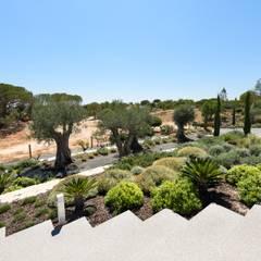 Jardíssimo - Casa Raio de Luz, Porches: Jardins  por Jardíssimo,Tropical