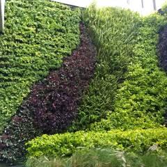 สวนหน้าบ้าน โดย AAVE Diseño y Construcción, โมเดิร์น