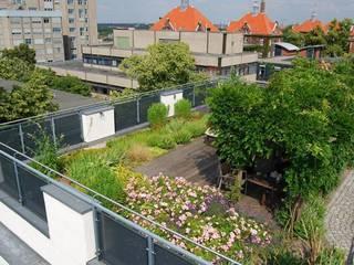 Terrace by Optigrün international AG