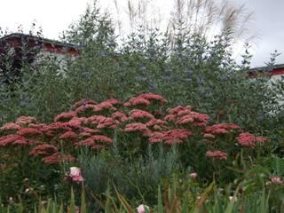 Ein Garten für die Mitarbeiter Schönberg. Pflanzdesign Garten