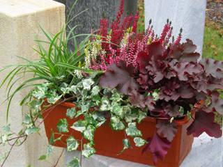Auch im Winter ein Bunter Balkon mit immergrünen und farbenfrohen Pflanzen:   von Harro's Pflanzenwelt